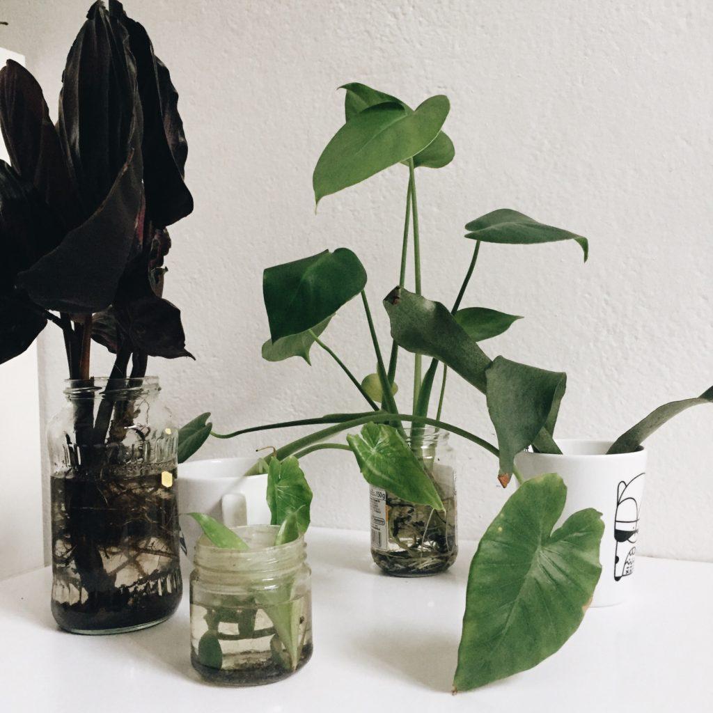 Przesadzanie roślin do doniczek
